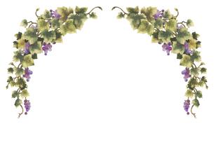 葡萄のイラストのフレーム(線無し)のイラスト素材 [FYI04117686]