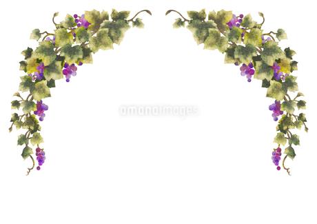 葡萄のイラストのフレーム(線無し)のイラスト素材 [FYI04117687]
