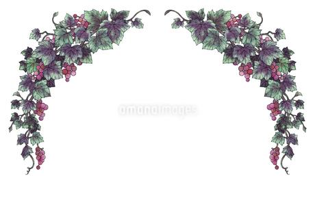 葡萄のイラストのフレーム(黒線)のイラスト素材 [FYI04117690]