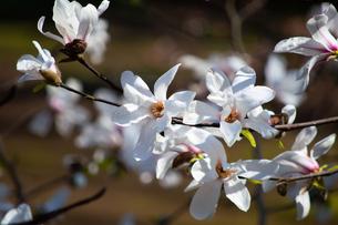 春の花の写真素材 [FYI04117883]