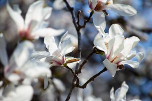 春の花の写真素材 [FYI04117886]