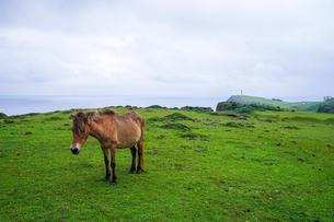 与那国馬の写真素材 [FYI04117933]