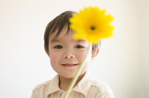 黄色いガーベラを持っている男の子の写真素材 [FYI04118139]