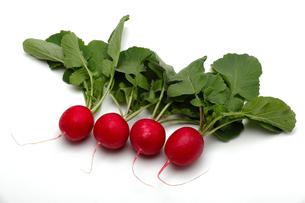 白い背景に小さな赤い大根の写真素材 [FYI04118295]