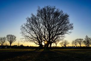 原っぱの一本木の写真素材 [FYI04118323]