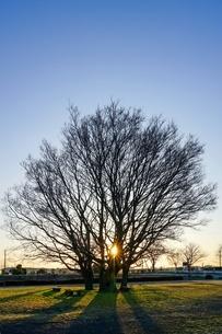 原っぱの一本木の写真素材 [FYI04118324]