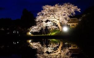 日本昔話の世界のような、茅葺屋根の家と夜桜のライトアップと水田リフレクションの写真素材 [FYI04118510]