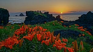 岩ユリが美しい佐渡島の夕景の写真素材 [FYI04118567]