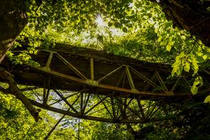 新潟県湯沢町の山の中に残る、錆びた鉄製の廃道、境橋。新緑とやなぎの綿毛に太陽がまぶしい。の写真素材 [FYI04118569]
