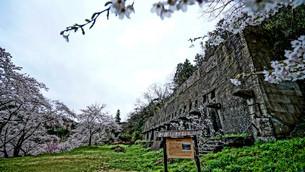 佐渡金銀山、近代産業遺産 搗鉱場跡と満開の桜の写真素材 [FYI04118570]