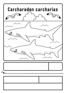 ホホジロザメ 塗り絵 応募用紙のイラスト素材 [FYI04118694]