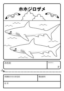 ホホジロザメ 塗り絵 応募用紙のイラスト素材 [FYI04118695]