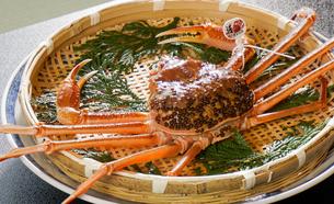 カニビルが甲羅に沢山ついたタグ付活本ずわい蟹の写真素材 [FYI04118801]