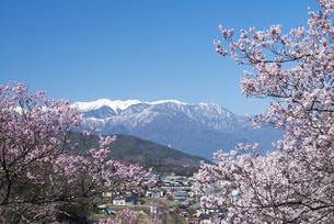 高遠城址公園の桜と中央アルプスの写真素材 [FYI04118813]