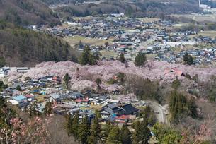 高遠城址公園の桜の写真素材 [FYI04118816]