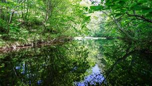 佐渡島の中央にある、高層湿原性浮島をもつ神秘的な乙和池の写真素材 [FYI04118841]