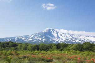 桑ノ木台湿原のレンゲツツジと鳥海山の写真素材 [FYI04118881]
