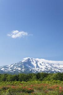 桑ノ木台湿原のレンゲツツジと鳥海山の写真素材 [FYI04118882]