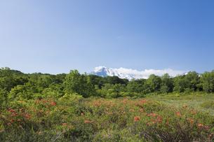 桑ノ木台湿原のレンゲツツジと鳥海山の写真素材 [FYI04118885]