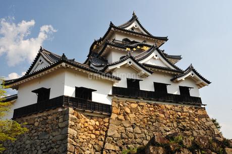 国宝彦根城の写真素材 [FYI04119047]