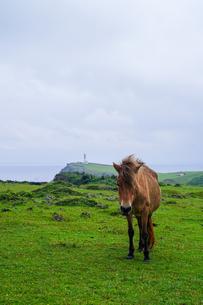 与那国馬の写真素材 [FYI04119477]