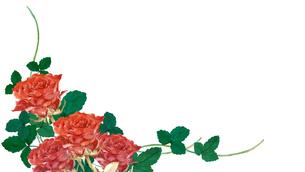 薔薇の水彩画のイラスト素材 [FYI04119596]
