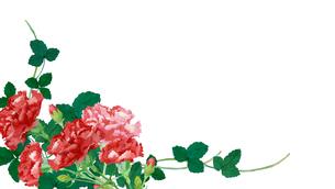 カーネーション水彩画のイラスト素材 [FYI04119729]