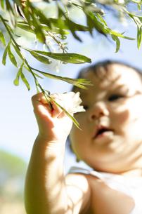 花を触っている赤ちゃんの写真素材 [FYI04119833]