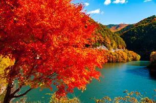 もみじ湖 湖畔のカエデ紅葉と湖の写真素材 [FYI04119850]