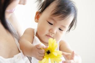 黄色いお花を触っている赤ちゃんの写真素材 [FYI04119863]