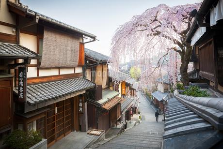 産寧坂と満開の枝垂桜の写真素材 [FYI04120053]