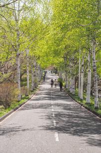 新緑の並木道の写真素材 [FYI04120175]