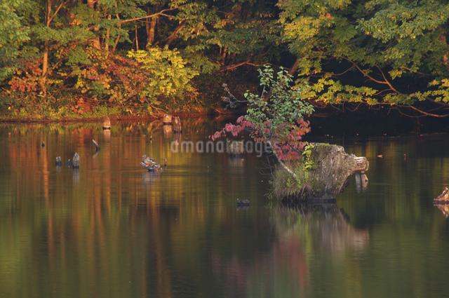 沼の夕暮れの写真素材 [FYI04120177]