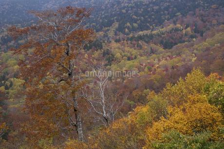 スカイバレーの紅葉の写真素材 [FYI04120198]
