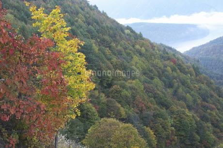 秋元湖の紅葉の写真素材 [FYI04120210]