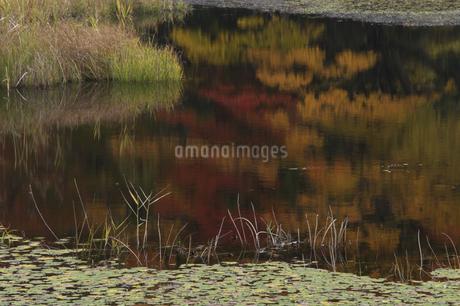 沼と紅葉の写真素材 [FYI04120217]