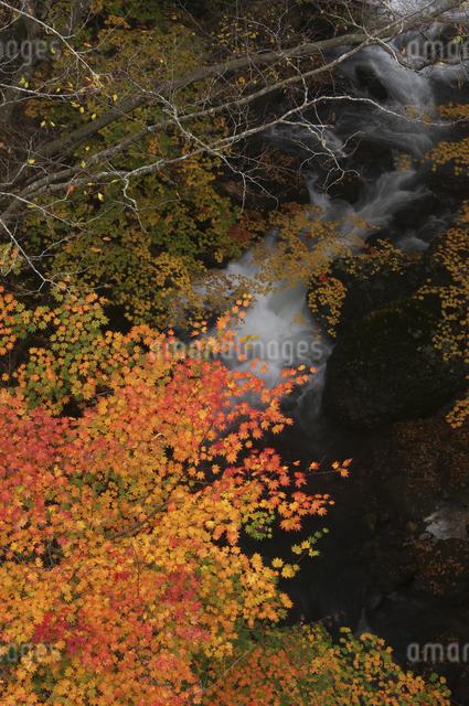 渓流と紅葉の写真素材 [FYI04120227]