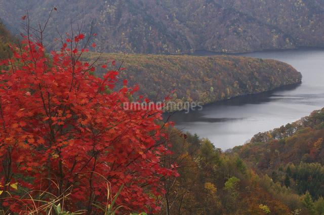 秋元湖の紅葉の写真素材 [FYI04120228]