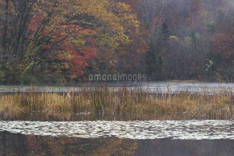 沼の紅葉の写真素材 [FYI04120232]
