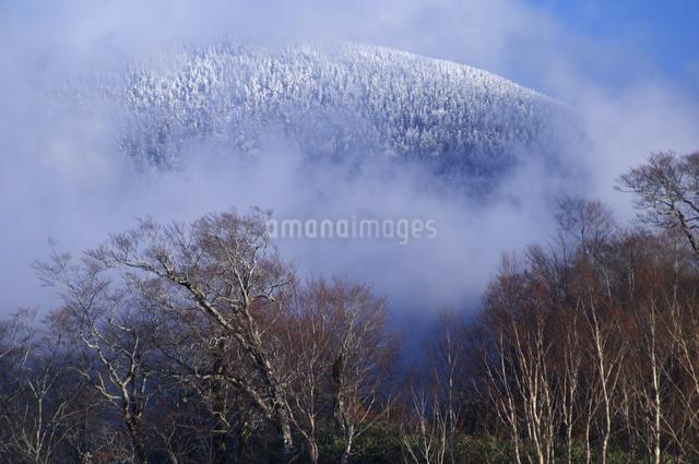 初雪の写真素材 [FYI04120237]