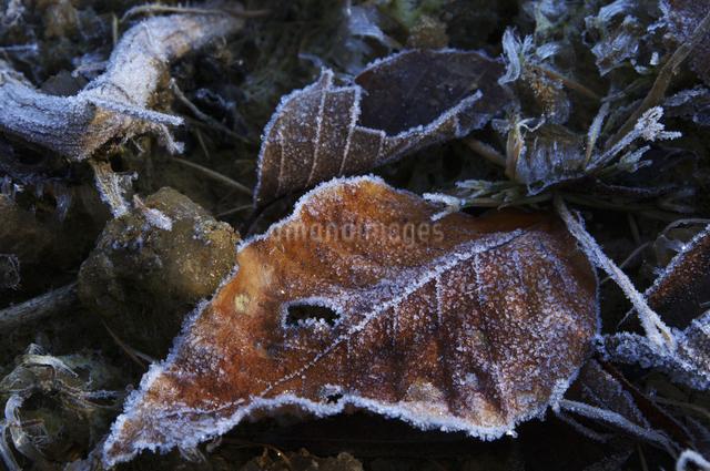 霜の写真素材 [FYI04120243]