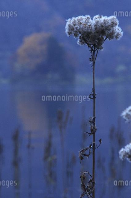 秋元湖の朝の写真素材 [FYI04120246]