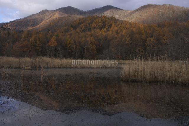 沼とカラマツ林の写真素材 [FYI04120252]