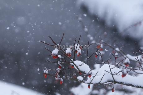 雪帽子の写真素材 [FYI04120256]