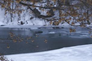 柳沼と雪の写真素材 [FYI04120258]