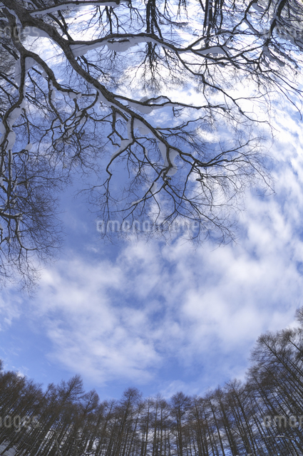青空の写真素材 [FYI04120269]