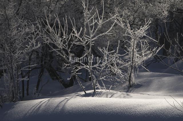 朝陽に輝く雪景色の写真素材 [FYI04120293]