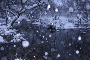 雪が舞うの写真素材 [FYI04120303]