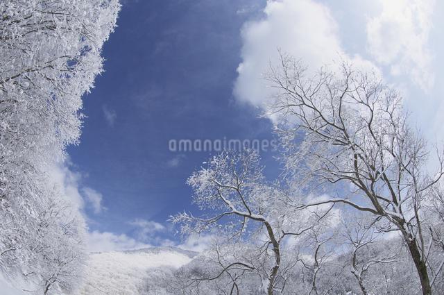 霧氷の写真素材 [FYI04120307]