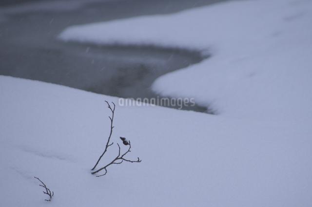 雪景色の写真素材 [FYI04120320]